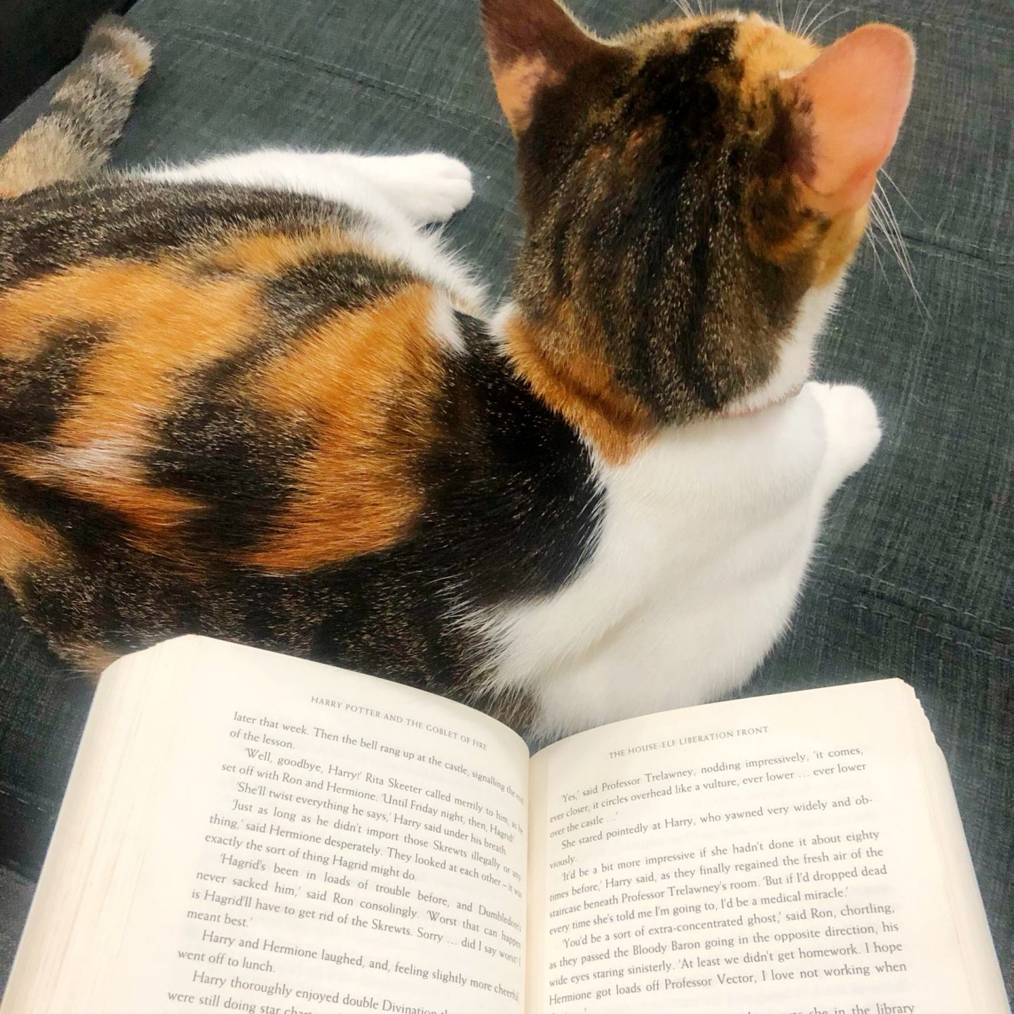 Reading with cats