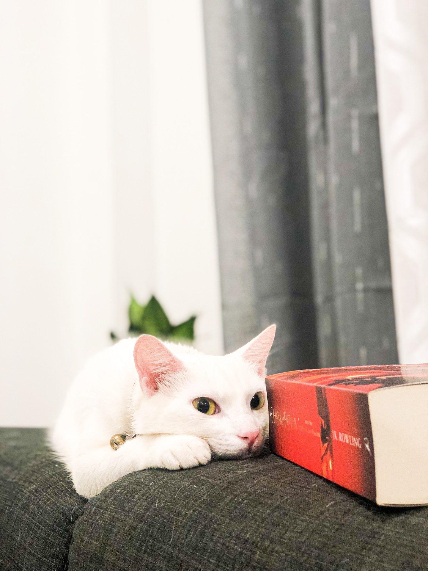Cats and books image