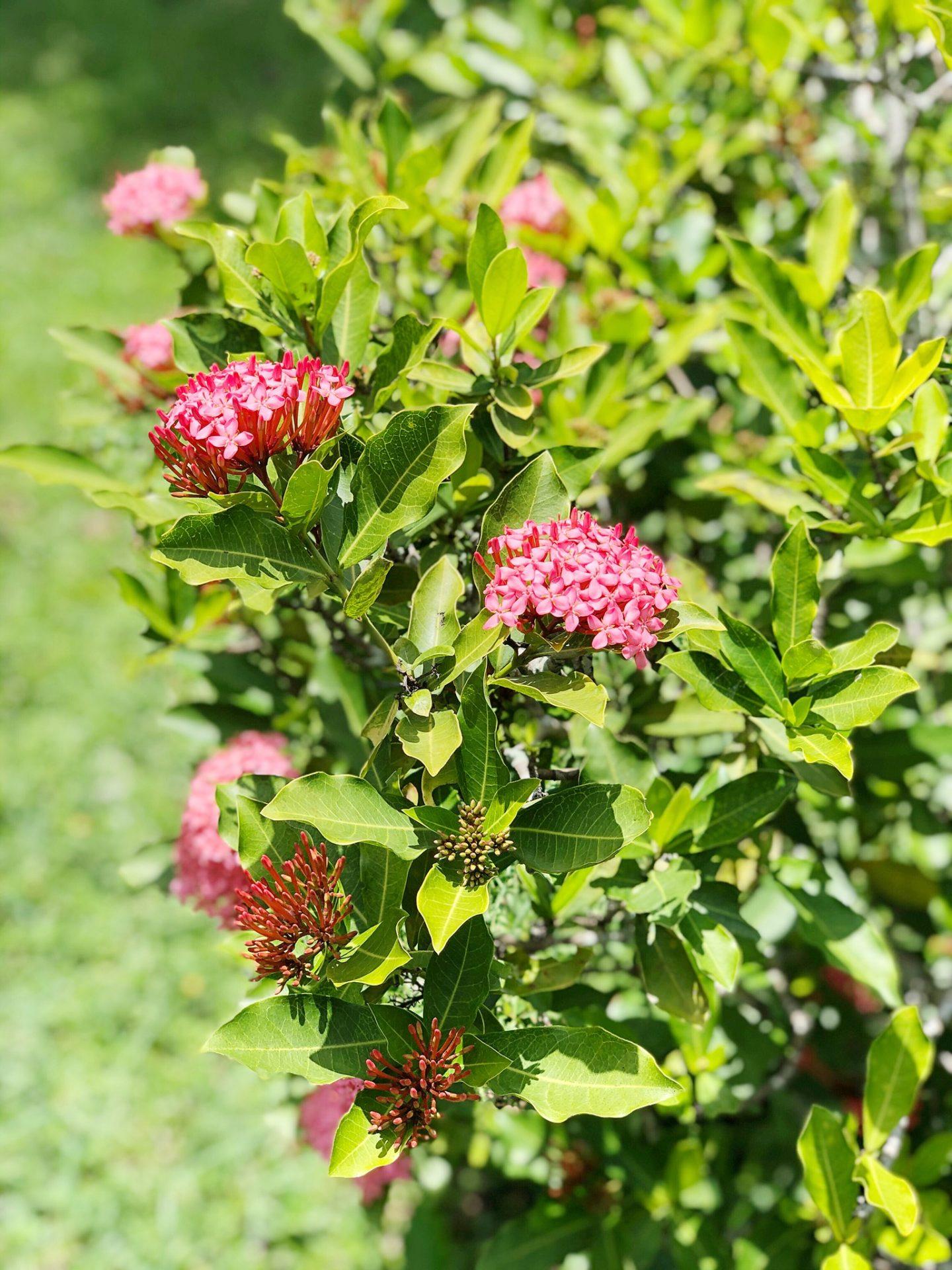 Royal Botanic Gardens Trinidad