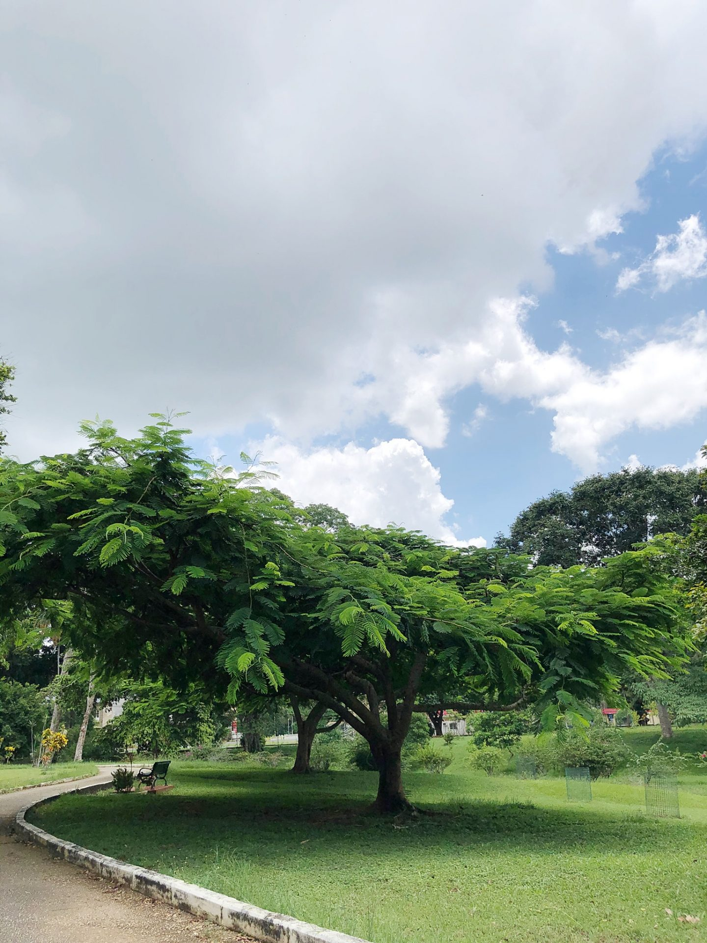 The Royal Botanic Gardens Trinidad