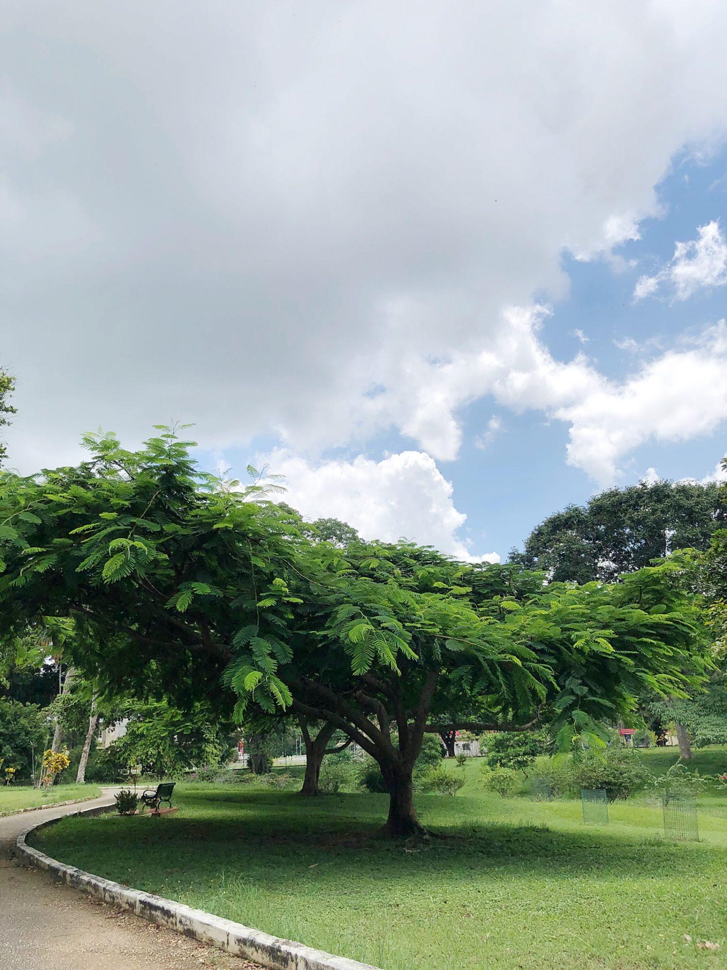The Royal Botanic Gardens Trinidad